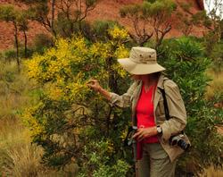 OBT 8 hike Wattle Tree