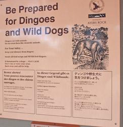 OBT 7 Dingo attack