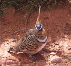 OBT 9 bird
