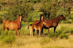 OBT 9 wild horses