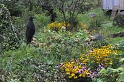 Monhegan sights garden