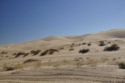 Plank Rd dunes