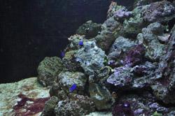 Biosphere coral reef