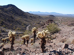 Gold claim cholla view