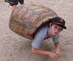 Desert museum Chris turtle