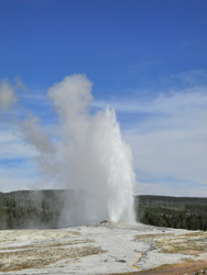 YNP1 -G Old Faithful
