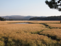 YNP-PhotoJ_golden grasses