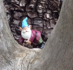 Showlow huff & puff trail gnome2